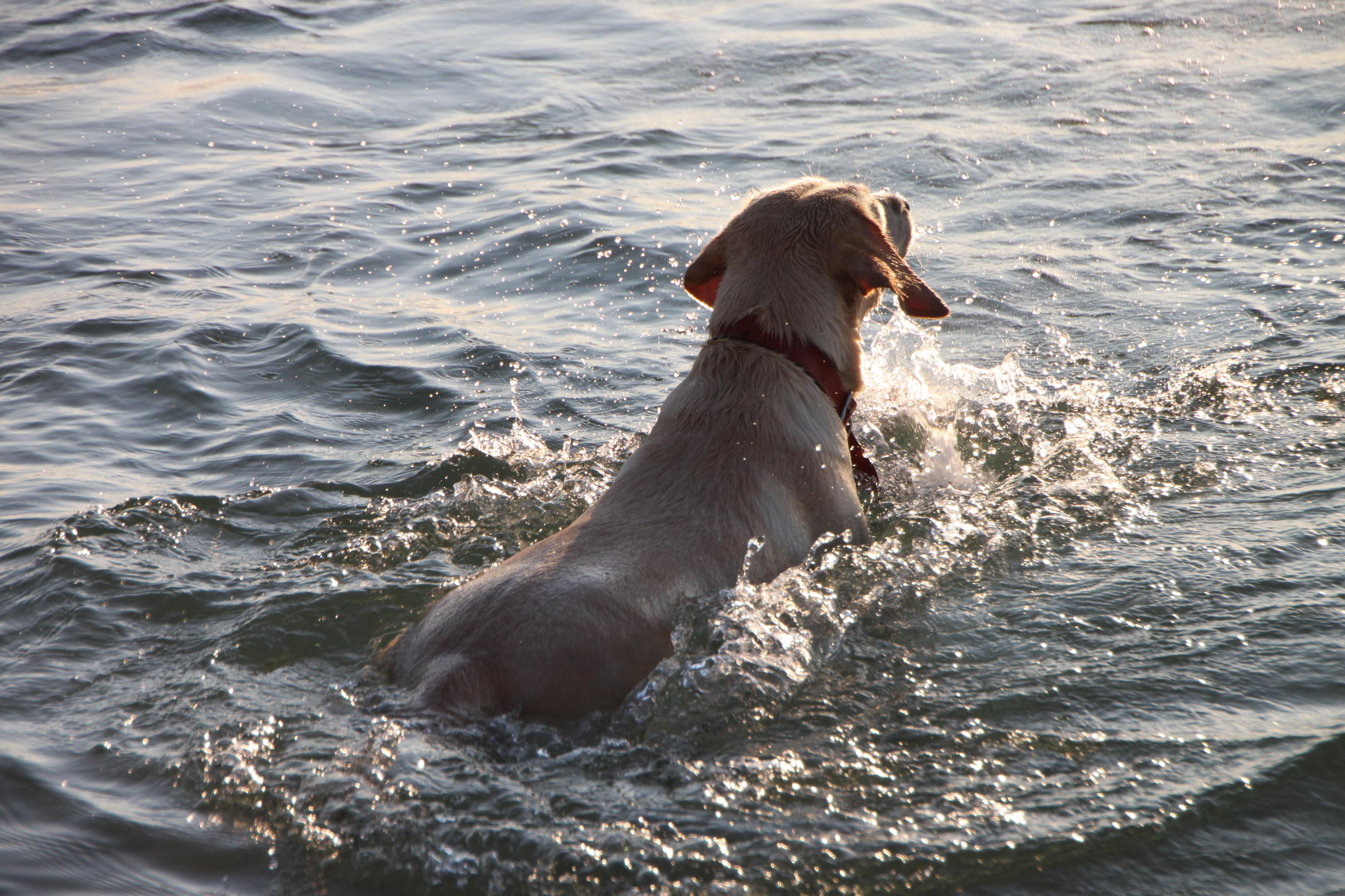 beach_dog_funny